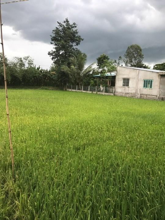 Bán gấp 983m2 đất vườn gần trạm thu phí Cai Lậy Tiền Giang Ảnh số 41420504
