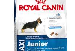 Royal Canin ~ Maxi Junior ~.